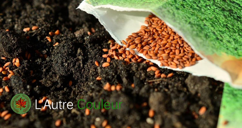 la diversité de semences
