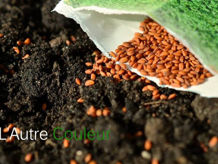 Lequel est le plus beau, le légume ou la semence?