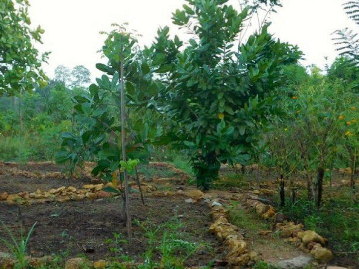 Amuura Permaculture Garden in Sri Lanka