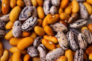 Seed Diversity - USC Canada - L'Autre Couleur