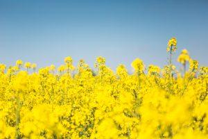 Seed diversity - L'Autre Couleur