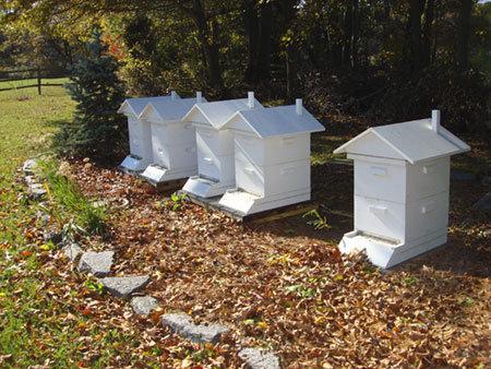 Delaware Beekeepers Association - Top Sustainable Companies in Delaware