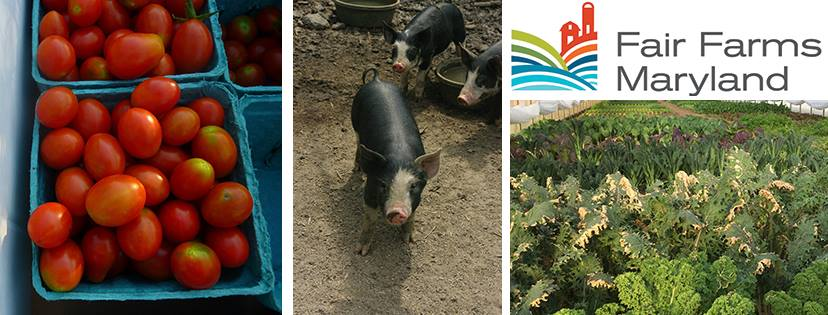 Fair Farms Maryland - Top Sustainable Companies in Maryland