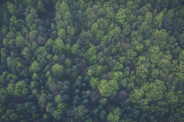 Notable Sustainable Companies in West Virginia